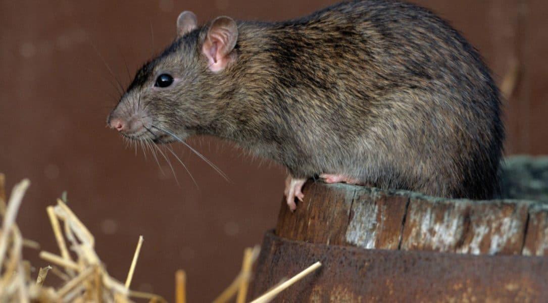 UNE MAISON SANS RATS